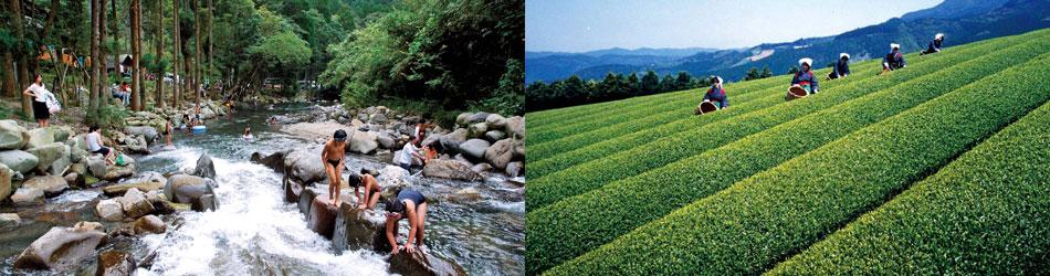 岳間渓谷と茶畑